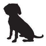 Beagle Silhouette Stock Image