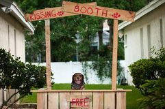 Free Beagle Sitting In A Kissing Booth Royalty Free Stock Image - 54481216