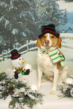 Beagle and Snowman Stock Photo