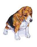 Beagle_Vector Lizenzfreie Stockfotografie