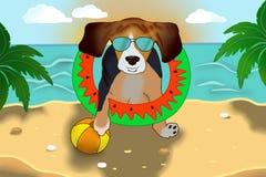 Beagle w okularach przeciwsłonecznych na plaży obraz royalty free