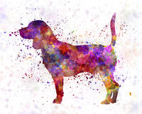 Beagle in watercolor Stock Image