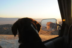 Beagles look out the window Stock Images