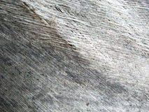 Beaitiful art design of palm natural photos stock images