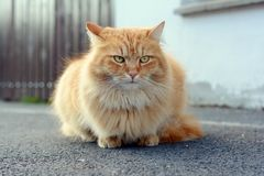 Beaitufil cat in the street Stock Photo