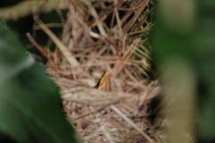 Beak of a bird. A chick bird in a nest stock images