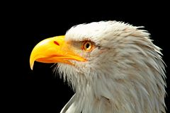 Beak, Bird, Bird Of Prey, Eagle