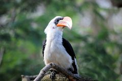 Beak, Bird, Fauna, Hornbill Stock Images