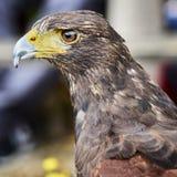 Beak, Bird, Hawk, Fauna stock images