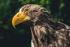 Beak, Bird Of Prey, Eagle, Bird