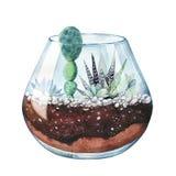 beak dekoracyjnego latającego ilustracyjnego wizerunek swój papierowa kawałka dymówki akwarela Zebra kaktus Haworthia paskował Te ilustracji