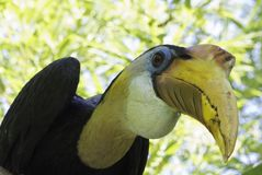 Beak, Fauna, Bird, Hornbill Stock Images