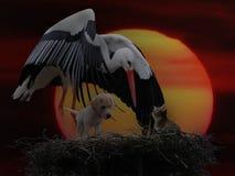 Beak, Fauna, Stork, Bird royalty free stock photo
