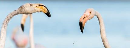 Beak, Flamingo, Water Bird, Bird royalty free stock photos