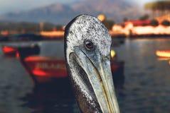 Beak, Pelican, Water, Bird royalty free stock photography