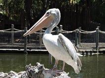 The beak Stock Image