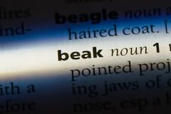 Beak. Word in a dictionary.  concept Stock Photos