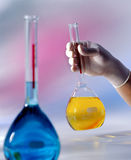 Beakers with colored liquid. Chemistry beakers with colored liquid Royalty Free Stock Image