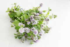 Beam blooming mint Stock Photography