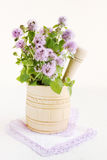 Beam blooming mint in wooden mortar Royalty Free Stock Photos