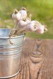 Beam of garlic in bucket on wood Royalty Free Stock Image