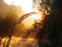 Beam of Light in the Forest Royalty Free Stock Photos
