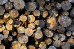 Beam of light on tree logs. Background image of a pile of logs with a beam of light from sunrise Royalty Free Stock Images