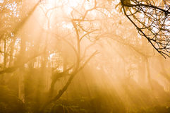 Beam of orange light in the fog Royalty Free Stock Photos