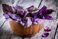 Beam of purple basil in the bowl Royalty Free Stock Photos
