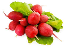 The beam of the radish Royalty Free Stock Image