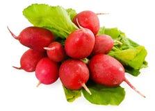 The beam of the radish. On white background, horizontal image Royalty Free Stock Image