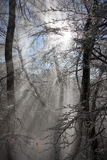 Beam of rays in the winter forest Royalty Free Stock Photography