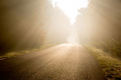 Beam of sun light comming though trees on empty road Royalty Free Stock Photo