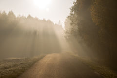 Beam of sun light comming though trees on empty road Stock Photography