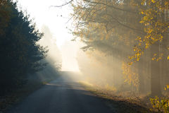 Beam of sun light comming though trees on empty road Stock Photos