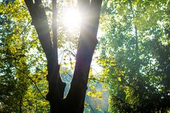 Hopeful Sunlight through tree branches in autumn Stock Image