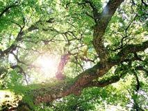 Beam through the tree Stock Photo