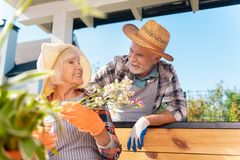 Beaming elderly lady holding white flowers looking at her handsome husband. Beaming lady. Beaming elderly lady wearing straw hat holding white flowers looking at stock photos