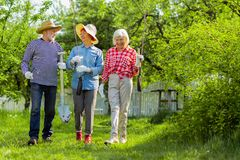 Beaming pensioners walking with tress and shovels before planting them. Pensioners walking. Beaming pensioners walking with tress and shovels before planting royalty free stock image