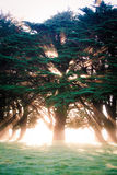 Beaming tree. Sun is beaming and radiating behind a tree Stock Photography