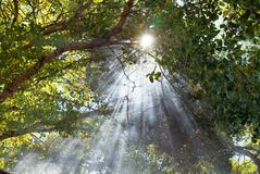 Beams of Light. Shine through canopy of trees Royalty Free Stock Photos