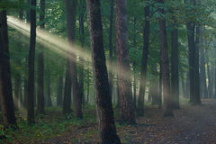 Beams of light Royalty Free Stock Images