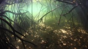 Beams of light in Indonesian mangrove forest. Beams of sunlight filter through the canopy of an Indonesian mangrove forest and underwater. Mangroves are stock video