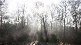 Beams of light on a road track through woodland forest: sunlight filtering through bare winter trees and mist royalty free stock photography