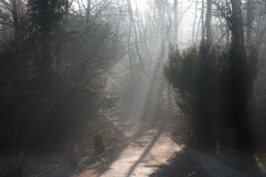 Beams of light on a road track through woodland forest: sunlight filtering through bare winter trees and mist stock images