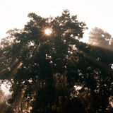 Beams of morning Royalty Free Stock Images