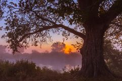 Beams of morning sun filtering through the tree Stock Photography