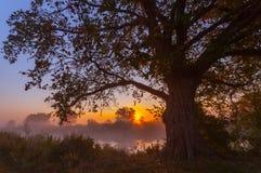 Beams of morning sun filtering through the tree Stock Photos