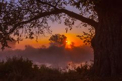 Beams of morning sun filtering through the tree Royalty Free Stock Photography