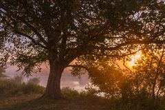 Beams of morning sun filtering through the tree Royalty Free Stock Images